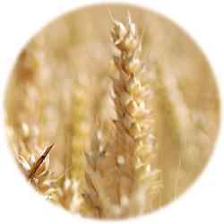 Argumentaire pour un rejet des deux initiatives «aliments équitables » et «souveraineté alimentaire »